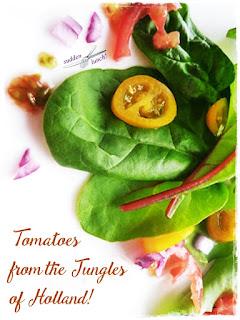 dutch jungle tomatoes pinterest image