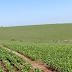 Plantio de soja no RS atinge 93% da área prevista