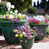 Cool-Season Containers . Go with Groups
