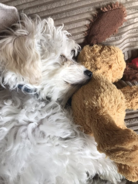 Bear laid on the sofa, cuddling his toys