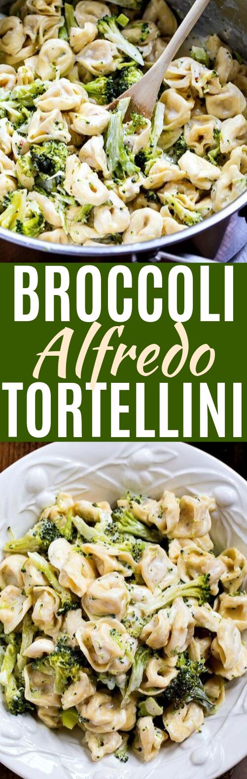 Broccoli Alfredo Tortellini #vegetarian #pasta