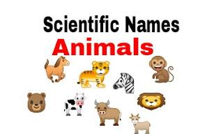 Scientific Name Of Animals