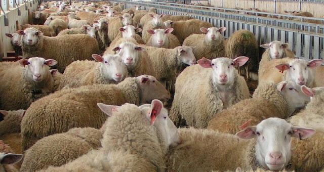 Αργολίδα: Μέχρι τις 4 Δεκεμβρίου οι προθεσμία αιτήσεων νομιμοποίησης κτηνοτροφικών εγκαταστάσεων