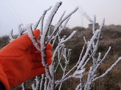 A bela foto mostra a mão de uma pessoa com luvas vermelhas segurando galhos secos de árvores congeladas no Sul do Brasil.