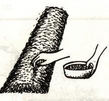 Gambar Penyemaian benih tembakau