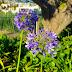 flores na Quinta Magnólia
