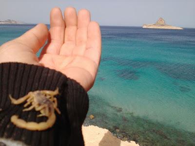 رفراف الشاطئ : في مارس تبدأ العديد من الحيوانات تبدأ كلها في الخروج تدريجيا من مرحلة السبات الشتوي اللذي بدأته في الليالي البيض .