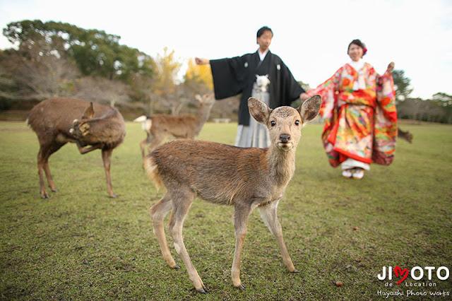 奈良の鹿と前撮りロケーション撮影