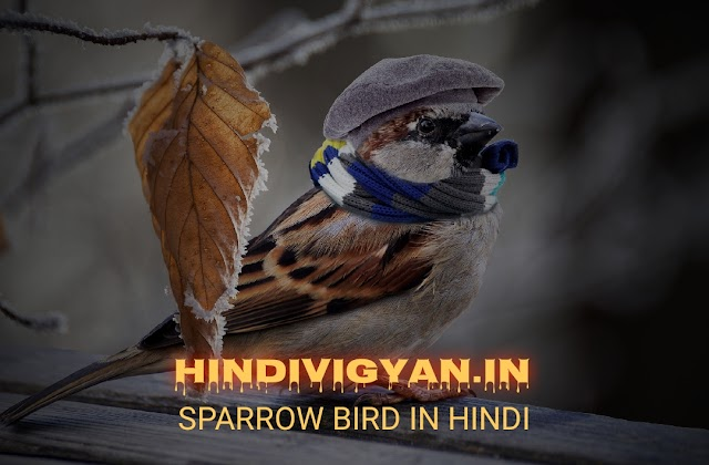 गौरैया चिड़िया के बारे में जानकारी , INFORMATION ABOUT SPARROW IN HINDI