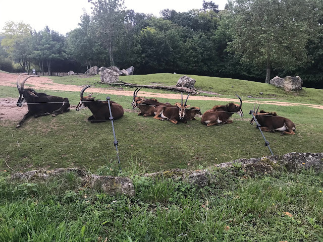 Zoo de beauval savane