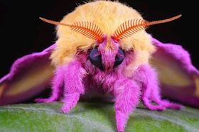 Most colorful animals in the world