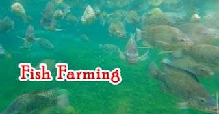 top best business ideas in uttarakhand: fish farming