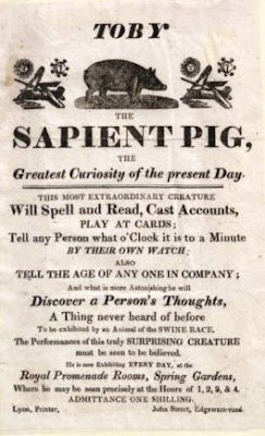 Toby the sapient pig