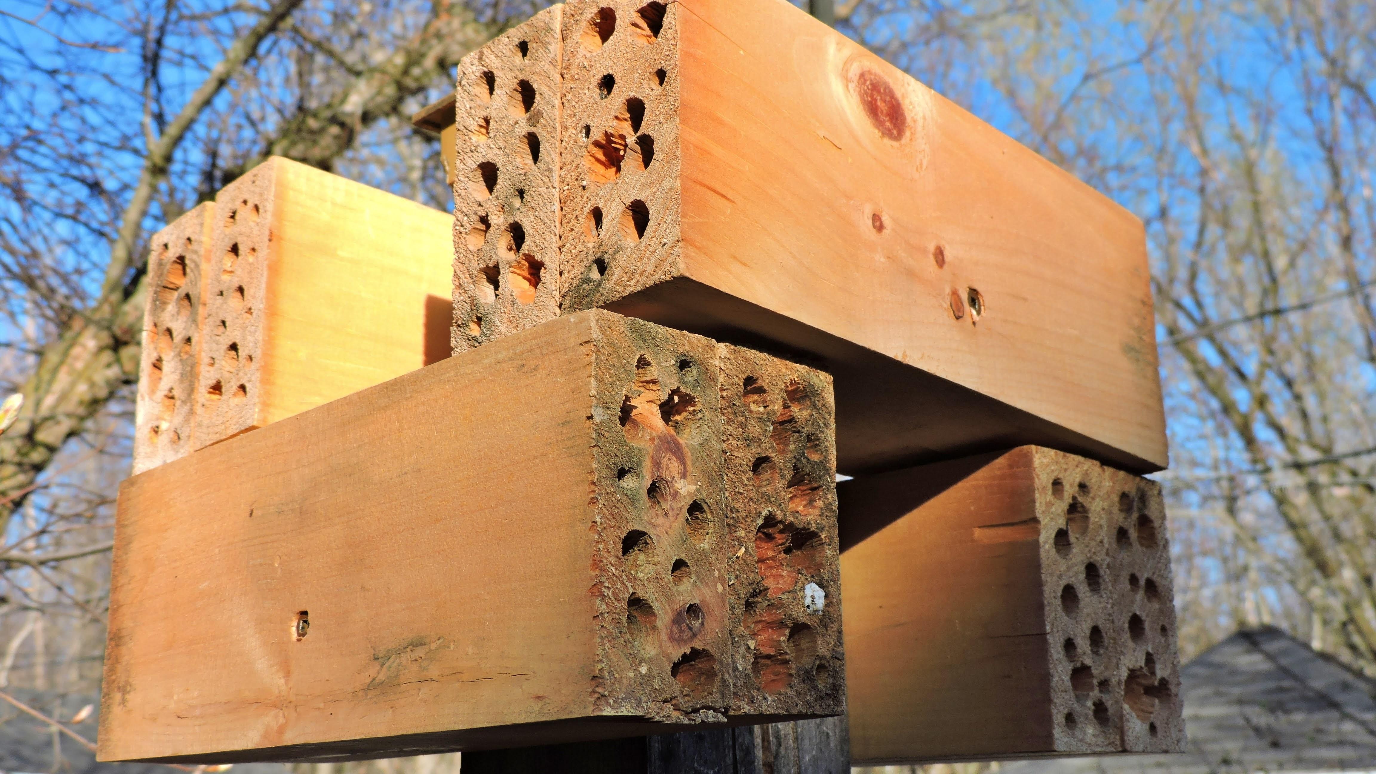 Condos pour abeilles sauvages