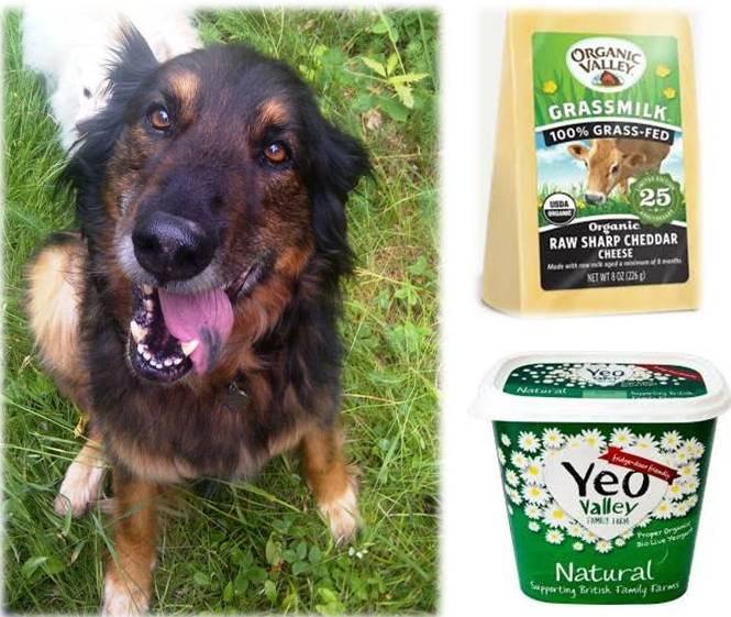 Ottawa Valley Dog Whisperer Dairy Products Cheese Kefir Yogurt
