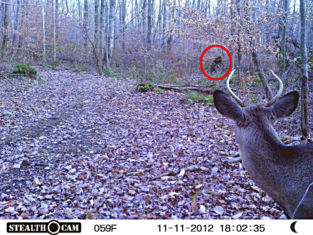 state of nh map with Trail Cam Photo Of Deer And Bigfoot on Maine Carte together with  likewise 602641 furthermore 356226003 as well Trail Cam Photo Of Deer And Bigfoot.