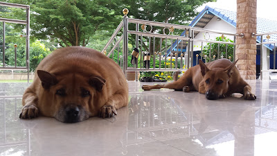 Unsere Hunde Jo und Sinto