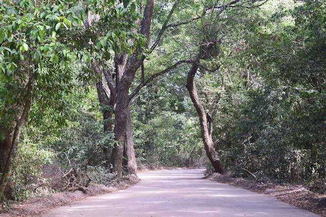 estrada de terra arborizada
