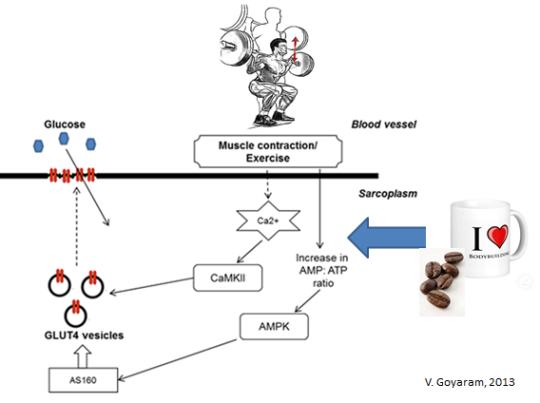 Strategies to maximize muscle glycogen resynthesis after exercise