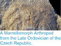 http://sciencythoughts.blogspot.co.uk/2013/09/a-marrellomorph-arthropod-from-late.html