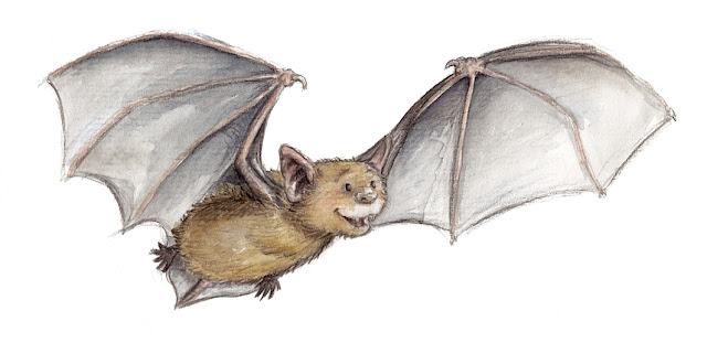 Fledermaus, Aquarell, watercolor, bat, Kinderbuchillustration, Angela Kommoß