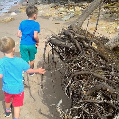 ranta juurakko meri lapset