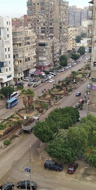 Removing trees in Heliopolis