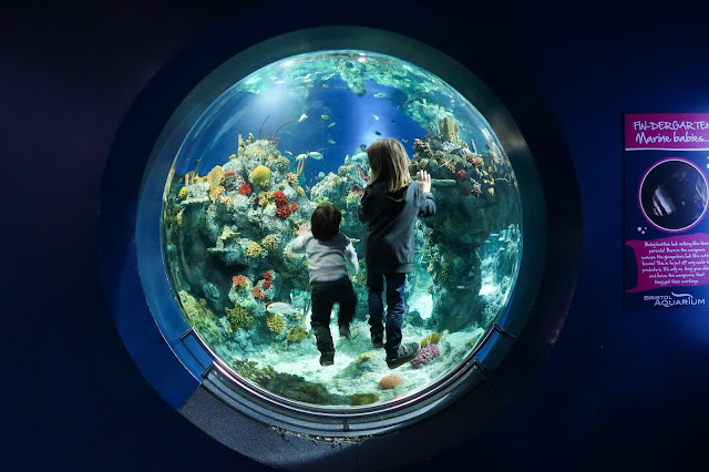 Aquarium round window