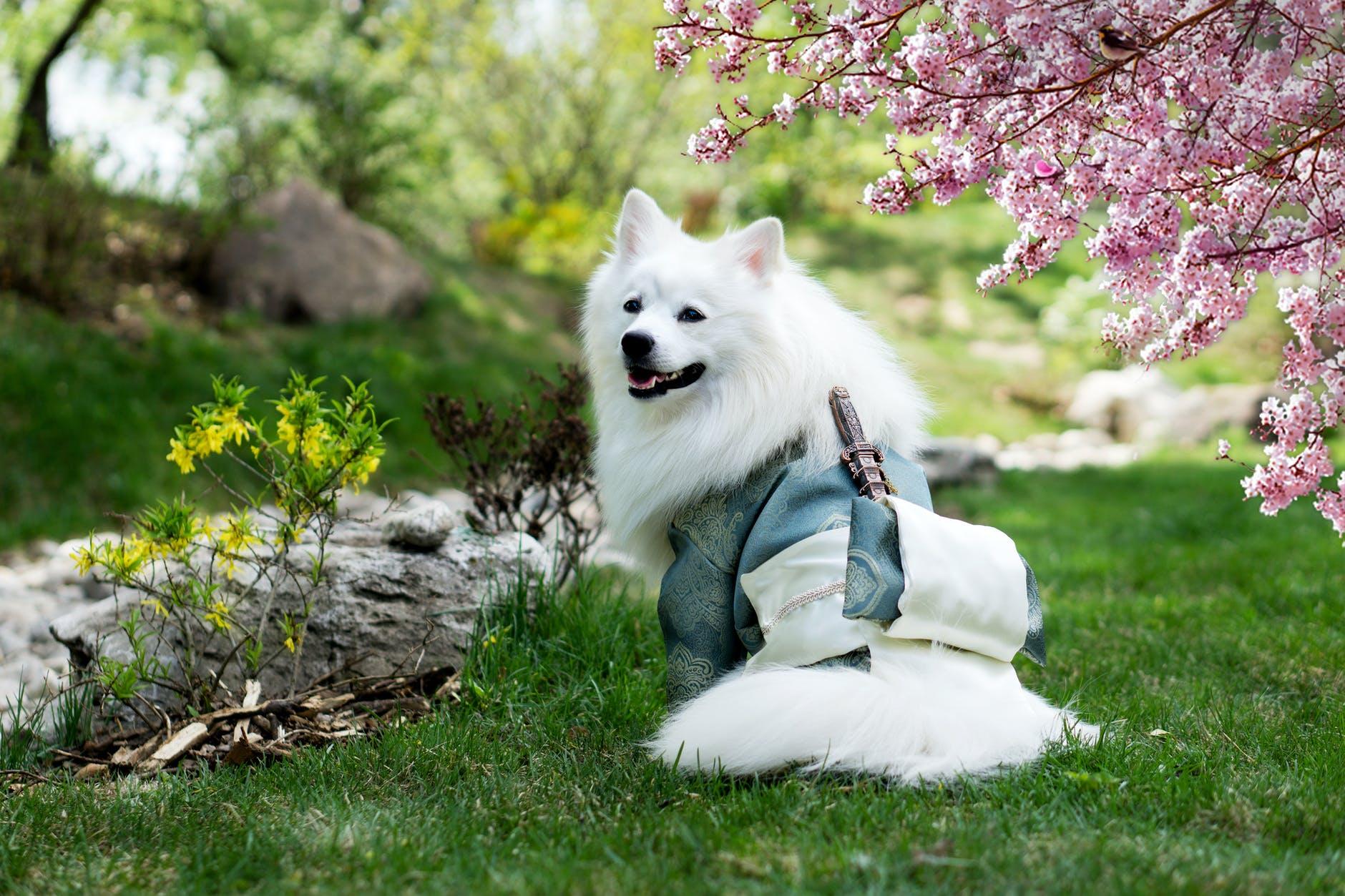 Pourquoi les chiens mangent-ils de l'herbe?