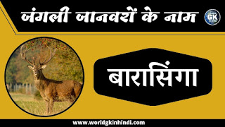 Stag Animal Name In Hindi