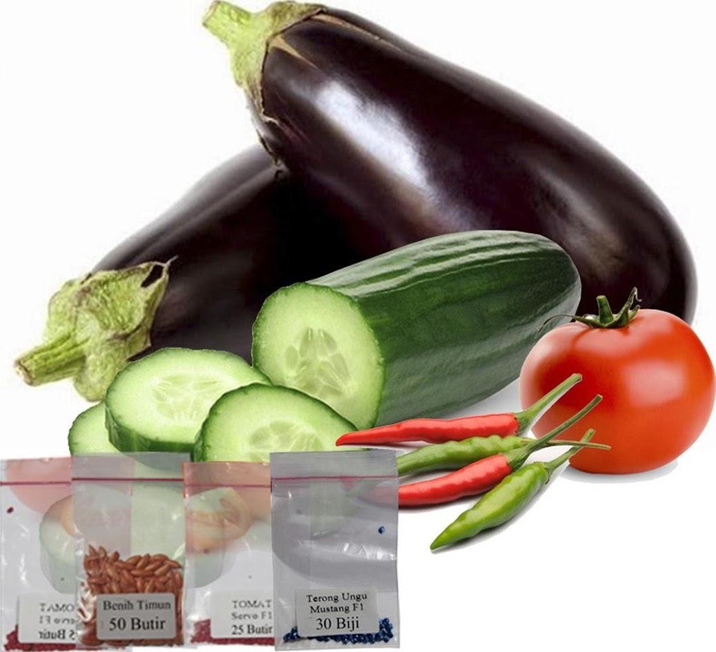 Jirifarm 10402 Paket Bibit Buah Terong Tomat Cabai Rawit dan Timun Ambon