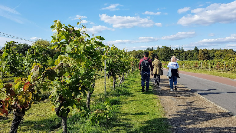 前往葡萄酒莊園