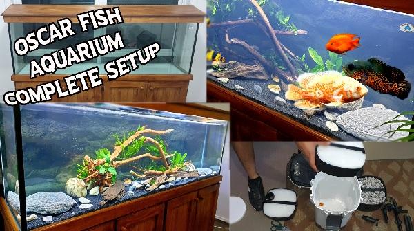 Oscar Fish Aquarium With Plants - Complete Setup