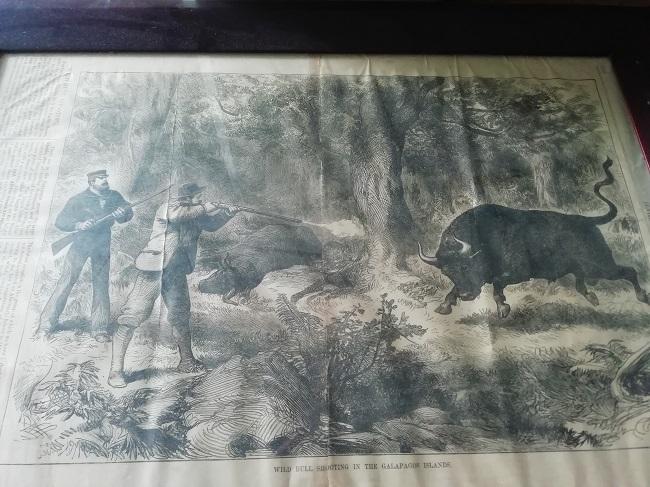 A la caza del toro salvaje