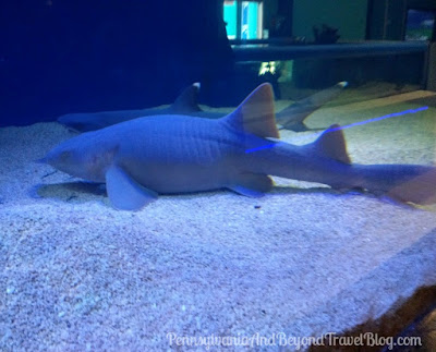 Seaport Aquarium in Wildwood New Jersey