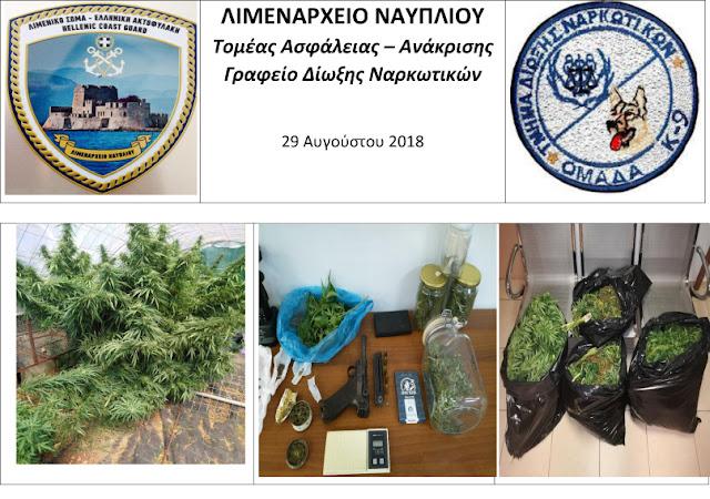 Σύλληψη 52χρονου στο Ναύπλιο από το Λιμεναρχείο για κατοχή δενδρυλλίων κάνναβης και όπλο