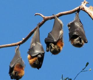 Murciélago durmiendo en una rama de un árbol
