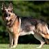Κορωνοϊός: Και δεύτερος σκύλος θετικός στον ιό στο Χονγκ Κονγκ