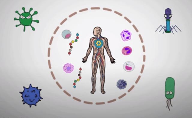 इम्यूनिटी कैसे बढ़ाये-immunity kaise badhaye
