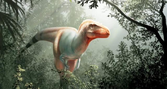 Discovery of a new Tyrannosaurus dinosaur in Canada