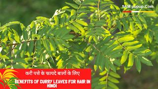 करी पत्ते के फायदे बालों के लिए- Benefits Of Curry Leaves For Hair In Hindi