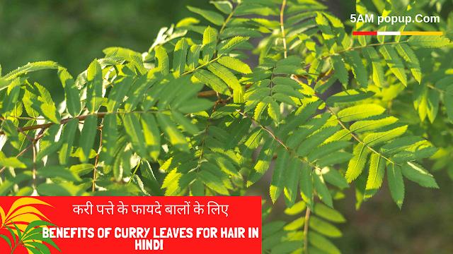 Benefits Of Curry Leaves For Hair In Hindi   बालों के लिए करी पत्ते के फायदे