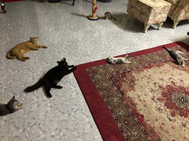 Jenis Cat Litter Malaysia