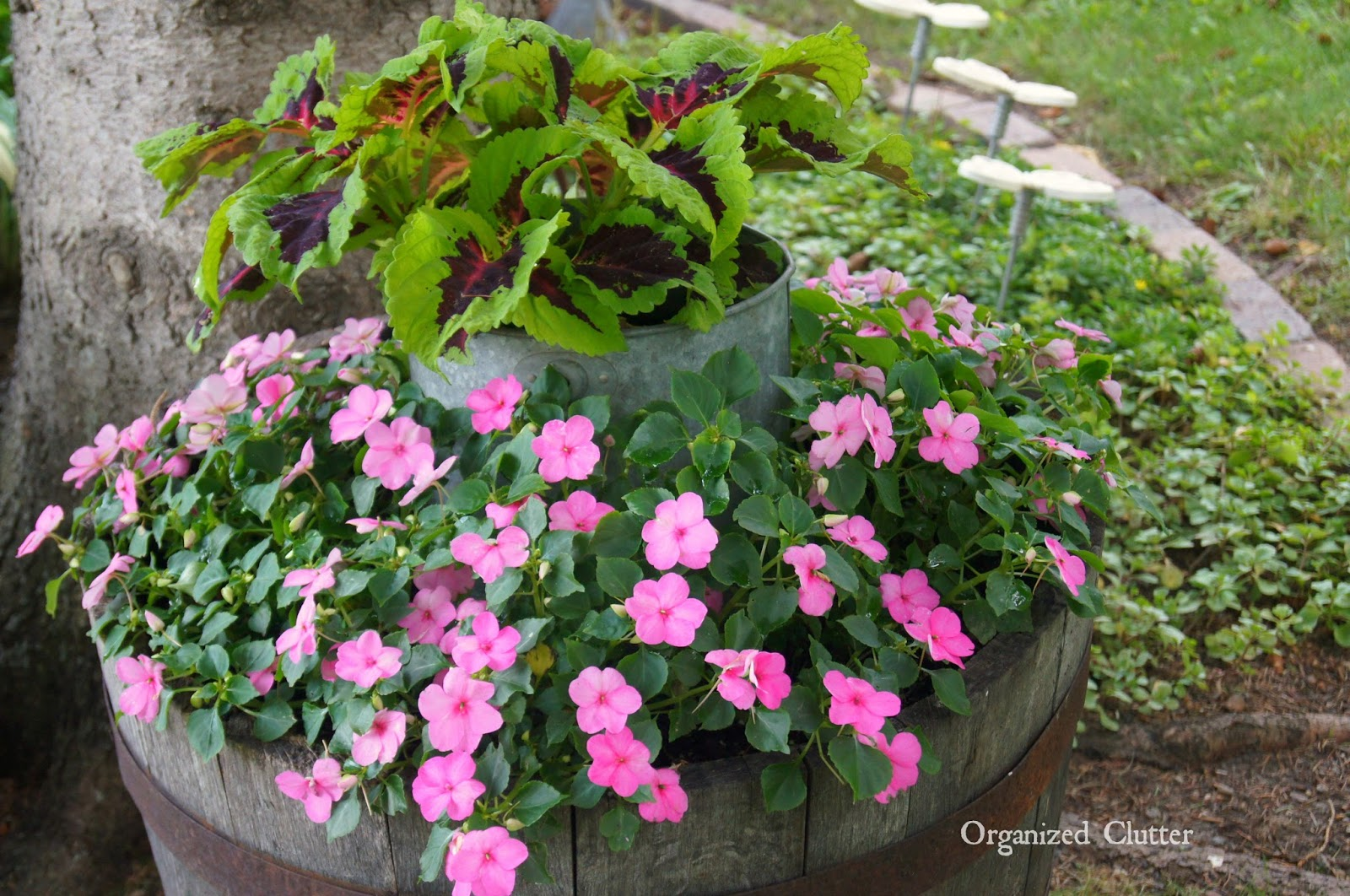 Coleus and Impatiens Under a Tree www.organizedclutterqueen.blogspot.com