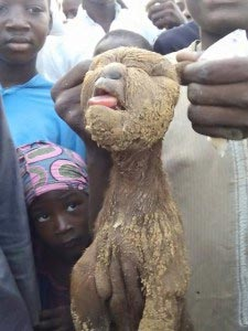 Graphic Photos: Goat With Human Head Found In Kano?