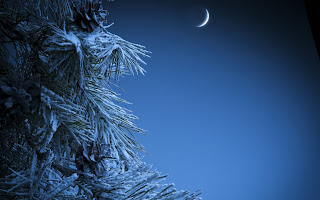 real-christmas-tree-with-snow-covered-leaves-in-moon-light-image.jpg
