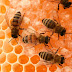 Những lợi ích đem lại từ mật ong nguyên chất