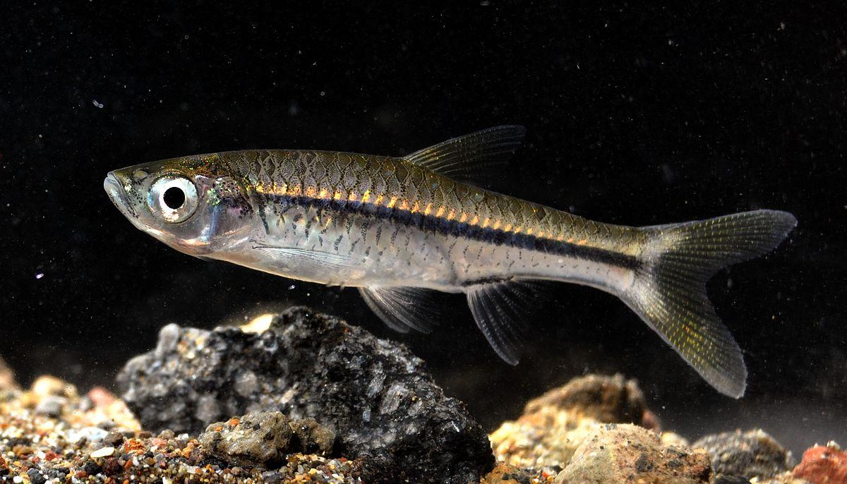 Kuglidti 101 Ikan Hias Air Jurnal Morfologi Bandeng Pdf Atau Bentuk Luar Pada Umumnya Dibagi Menjadi Kelompok Yaitu Bagian Kepala Caput Badan Truncus Dan