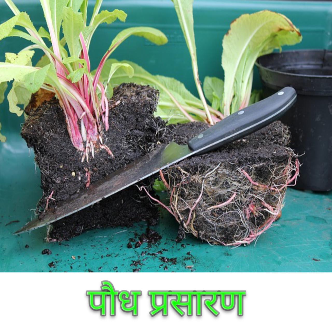 पौध प्रसारण Plant Propagation