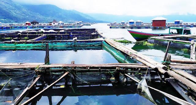 Keberadaan 450 Unit KJA di Lumbokseminung Berdampak Terhadap Perekonomian Masyarakat